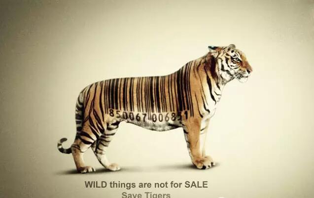 保护动物宣传公益海报欣赏图片